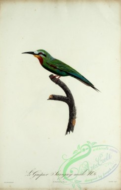 bee_eaters-00057 - Bee-eater, 6