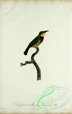 bee_eaters-00059 - Bee-eater, 8