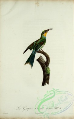 bee_eaters-00060 - Bee-eater, 9