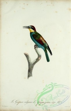 bee_eaters-00063 - Common bee-eater, 2