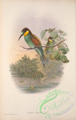 bee_eaters-00071 - 009-European Bee-eater, merops apiaster