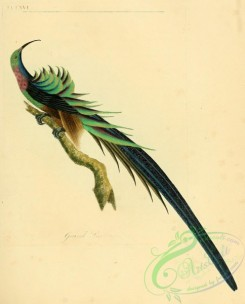 bee_eaters-00121 - Grand Promerops