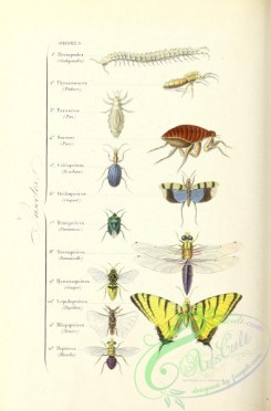bees-00262 - 005-Butterfly, Musk, Bee, Wasp, Scolopendra