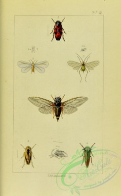 bees-00265 - 012-cicada, anthophora, cercopis, membracis, aphis, aleyrodes
