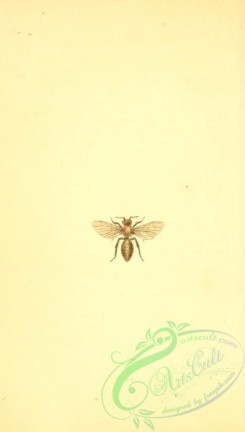 bees-00368 - 005-3-andrena