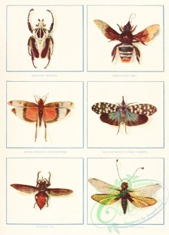 bees-00376 - Goliath Beetle, Carpenter Bee, Coral-Winted Grasshopper, Blue-winged Candle Insect, Robber Fly, Long-horned Ant-Lion