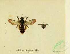 bees-00380 - andrena, 229