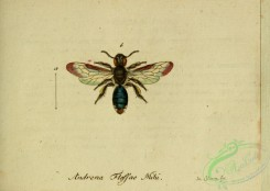 bees-00393 - andrena, 159
