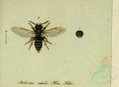 bees-00395 - andrena, 279