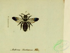bees-00409 - andrena, 224