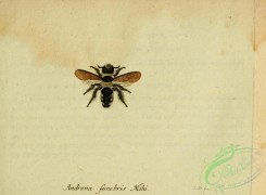 bees-00415 - andrena, 005
