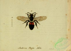 bees-00471 - andrena, 034
