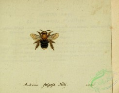 bees-00480 - andrena, 231