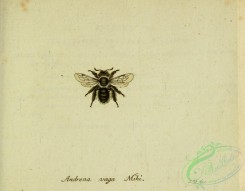 bees-00482 - andrena, 233