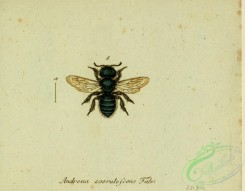 bees-00485 - andrena, 257