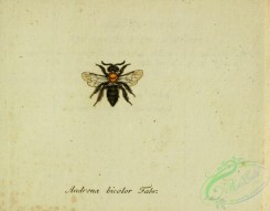 bees-00486 - andrena, 258