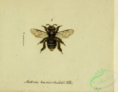 bees-00487 - andrena, 259