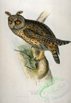 best_birds-00040 - Asio otus by John Gould [1792x2573]
