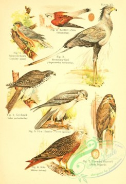 bird_atlas-00007 - 007