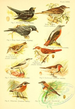 bird_atlas-00028 - 029