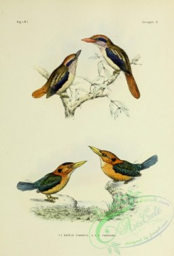 bird_atlas-00068 - Lilac-cheeked Kingfisher, dacelo torotoro
