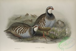birds-37742 - 444-Caccabis rubra, Red-legged Partridge