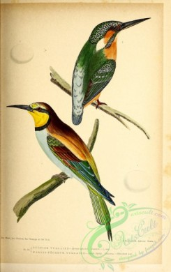 birds-45653 - 016-European Bee-eater, merops apiaster, Common Kingfisher, alcedo ispida