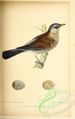 birds-45682 - 045-Fieldfare, turdus pilaris