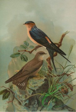 birds_full_color-00440 - Striated Swallow, Crag Martin