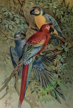 birds_full_color-00528 - Maccaw