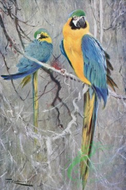 birds_full_color-00535 - BLUE MACAW