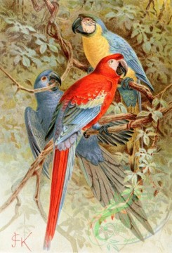 birds_full_color-00541 - MACAW