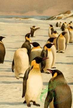 birds_full_color-00801 - Penguin