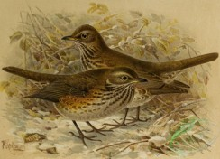 birds_full_color-01609 - 020-REDWING