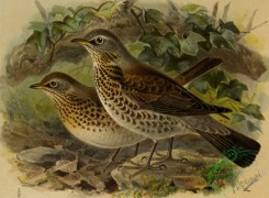 birds_full_color-01616 - 046-FIELDFARE
