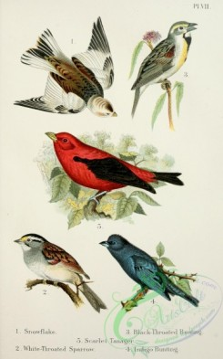 birds_in_flight-00033 - Snowflake, White-Throated Sparrow, Black-Throated Bunting, Indigo Bunting, Scarlet Tanager