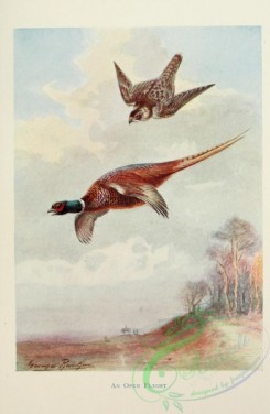 birds_in_flight-00051 - Pheasant, Hawk