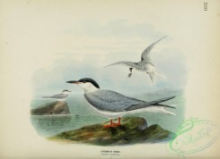birds_in_flight-00265 - COMMON TERN