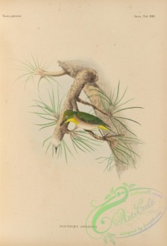 birds_of_japan-00039 - 036-Japanese White-eye, zosterops japonicus