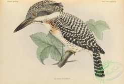 birds_of_japan-00056 - 055-Crested Kingfisher, alcedo lugubris
