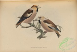 birds_of_japan-00066 - 069-coccothraustes vulgaris japonicus