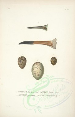 birds_parts_eggs-00001 - image [2280x3558]