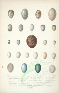 birds_parts_eggs-00002 - image [2280x3558]