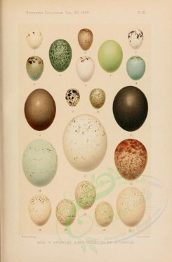 birds_parts_eggs-00007 - image [1823x2763]