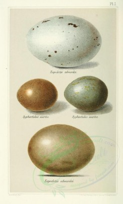 birds_parts_eggs-00011 - image [2240x3694]