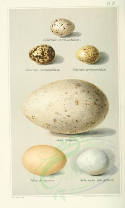 birds_parts_eggs-00014 - image [2240x3706]