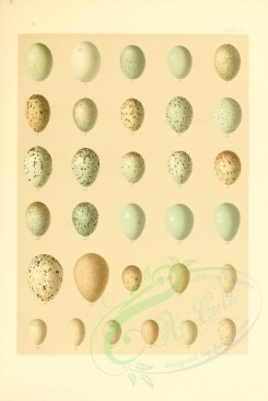 birds_parts_eggs-00020 - image [2528x3770]