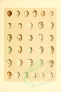 birds_parts_eggs-00021 - image [2528x3770]