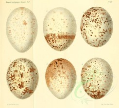 birds_parts_eggs-00047 - image [2557x2335]