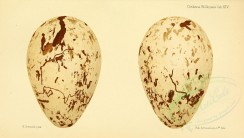 birds_parts_eggs-00049 - image [3630x2051]